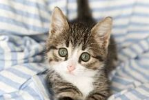 Cat | PetParent / For the cat lovers!