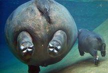 Cute creatures :)