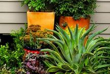 Seasonal Container Garden Ideas / Make your personal statement with seasonally planted containers.