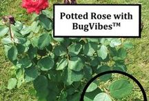 Comparisons - With vs. Without BugVibes™