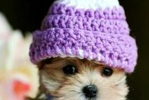 KNITS for Doggies!