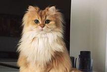 gatinhos fofinhos / amo gatos <3