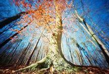 Drzewo / Drzewo oprócz człowieka jest chyba najczęstszym tematem zdjęć i chyba równie wdzięcznym, a na pewno bardziej cierpliwym.