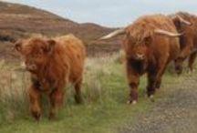 La faune des Pays celtes / Entre mythe et réalités, les animaux caractéristiques de l'Irlande, l'Ecosse et le Pays de Galles