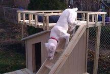 dog house / mam nowego psa i na wiosnę będę potrzebowała dla niego fajnej budy gdy będę potrzebowała go trochę odizolować od ludzi i innych psów, psia buda