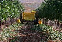 Vineyards & Scenery
