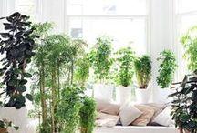 Healthy plants / Een groot aantal kamerplanten zijn zeer gezond. Ze zuiveren namelijk de lucht, verbeteren de luchtvochtigheid en zijn geluiddempend. Kamerplanten zorgen voor een betere leef- en werkomgeving.