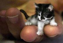 inspo, kittens