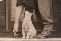 Purrfect / Images of Purrfect cats from the collections of the State Library of NSW in Sydney Australia.