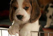 Cute puppy's  / Cute puppy's