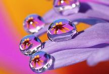 Bubbles & Dewdrops / Another of nature's treasures