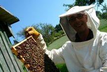 Black Forest Honey for hungry bears Schwarzwald-Honig für Naschbären / Pure Honey directly from the beekeeper. Echter Schwarzwald-Honig direkt vom Imker.