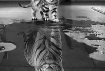 Amazing pics