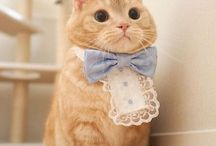 Cats are better than people / what does a kitten wear? dia-purrrs!