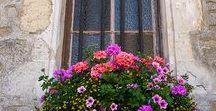 Blomkrukor & balkonglådor / Sommarblommor, perenner,