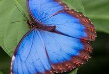 Butterfly / by Joanna D.