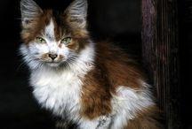 Ritratto di gatto / Ma perché i gatti sono così così così .....