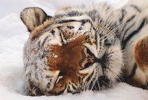 Com'è dolce dormire.... / Gatti,cani,e tutti gli altri