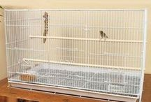 ✿ Zebra Finch Cage Setup ✿ / Finding a Zebra Finch Cage Setup for new finch keepers and experienced hands alike.