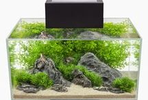 ✿ Modern Contemporary Fish Tanks ✿ / A spiffy collection of modern contemporary fish tanks and accessories to inspire you.