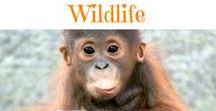 ✿ Wildlife ✿ / Wildlife photos we find while surfing the web.  Enjoy!