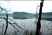 Север Ленинградской области / Любимый Финский залив, озера, рощи, сосны...