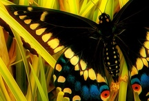 Winged masterpieces in God's creation / Butterflies Dragonflies insects with wings