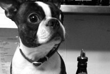 Who let the dogs out / Check out what Henry likes and recommends you to do in the city with your dog / by Roger Smith Hotel