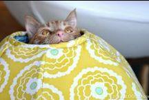 Feline Finds / Fashion, Furniture, Fun Stuff