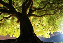 Only God can make a tree / Trees