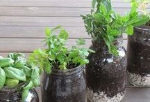 - Gardening - / If you have a green thumb, or not...you are sure to snag some GREEN inspiration here! / by Dawn w/LeroyLime