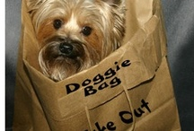 Doggy Bag  / Leftovers / by Ann Clasby
