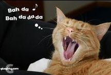 Cat Funnies / Funny cats, funny cat cartoons, funny cat photos