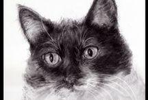 Cat Art / Cat art, Photoshopped cat art, original cat art, cat portraits