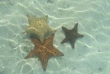 Oceans of miracles / Beach ocean Sanibel