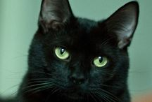 Cats Black / The best kind of cats! / by Damon Laws