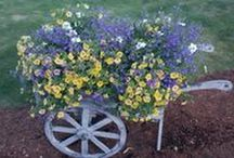 "Barb Schwarz Garden / ""Always Look for the Beauty in the Garden of Life!' Whether Staging a Garden or Staging a Home make it simple, inviting, beautiful and full of love! I am sharing ideas with you of Staging your Garden, planting tips, product information, plant care, lighting info and much more! Visit me here often! Thank you, Barb Schwarz / by Barb Schwarz, Stagedhomes.com IAHSP"