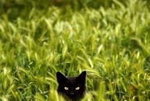 Gatos y otros animales menores jeje