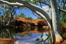 Western Australia / Australia's largest state by area with the countries 4th largest city Perth in the North West of the territory, the east of the state is predominantly desert and the west is 13000km's of pristine coast line .