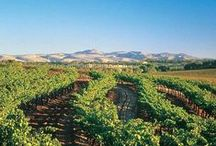 Southern Territory / You will find some of the most arid parts of Australia in this territory yet it is known for long summers, stunning beaches and award winning wine, events and festivals.