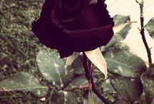 My Roses! Beautiful Garden. / Rosales