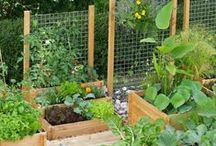 Keittiöpuutarha - Kitchen Garden / Grow your own food - ideas and inspiration for plants and places.