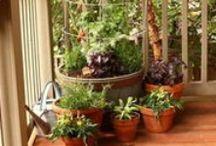 El huerto en el balcon / ideas para cultivar hortalizas y frutas en macetas.
