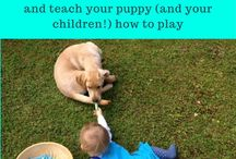 Puppy Training / Puppy training, Puppy problems - all things puppy. Force-free reward-based training ideas only! Puppy Training Books, free puppy email courses, free guides and downloads, superb online Puppy course! | #puppytraining, #puppytrainingtips, #newpuppy, #puppyhousetraining #stoppuppybiting | www.brilliantfamilydog.com