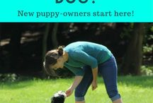 """Brilliant Family Dog Blog / Dog and Puppy Training articles, Dog Training Books, Free courses, Free Guides, Books for Dogs and Puppies, also for Reactive, Fearful, and Aggressive """"Growly Dogs"""" 