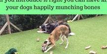 Dog Feeding and Dog Treats / Healthy dog foods and dog treats. Free e-mail training course, Free guides and downloads | Dog food, dog treats, #healthydogfood, #dogdiet, #dogfeeding, #puppytrainingtreats | www.brilliantfamilydog.com
