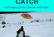 Dog Toys / Toys for your dog or puppy - safe dog toys, easy-to-make dog toys | Free guides and downloads |  #puppytoys, #makeyourowndogtoys, #dogplay, #dogball, #dogfrisbee | www.brilliantfamilydog.com