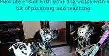 Dog Leashes and Harnesses / Which harness and leash for your dog? Free Guides and downloads | Dog harness, dog leash, dog walking harness #dogleash, #dogharness | www.brilliantfamilydog.com