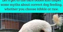 Dog and Puppy Resources | Books, Free Guides, Courses / Dog and Puppy Resources for your dog | Recommended Books, Free Guides, Online Courses, free email courses | #dogtrainingbooks, #puppytrainingbooks, #dogtrainingguides, #dogclasses | www.brilliantfamilydog.com