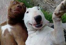 Dogs! / by Marsie Garcia